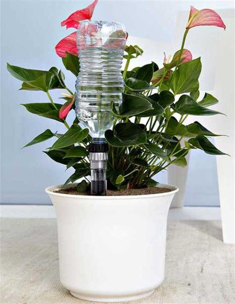innaffiare fiori vacanza innaffiare le piante in vaso