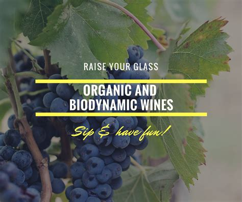 australian organic organic and bio dynamic do you love to know about organic and biodynamic wines