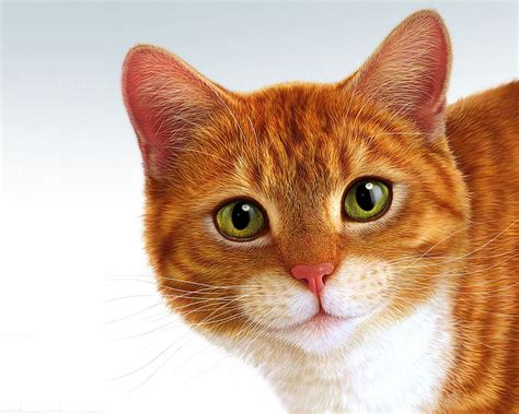 a cat the world s cat health tracker and fitness