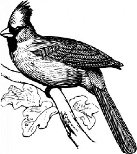 Man of war bird wikipedia free
