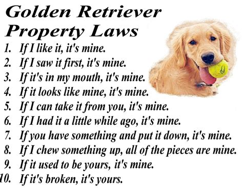 valor golden retrievers golden retriever property valor goldens