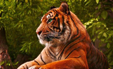 imagenes de tigres verdes fondo pantalla tigre
