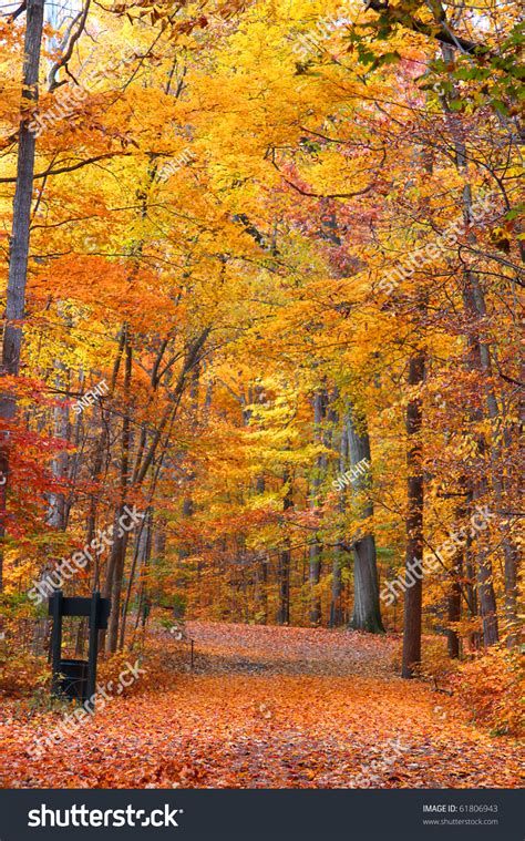 bright colored trees in mayberry state park in michigan