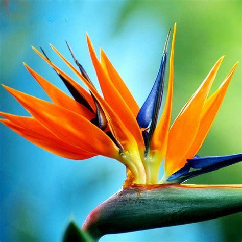 Diy Hanging Plant Pot comparer les prix sur plant orange flowers online