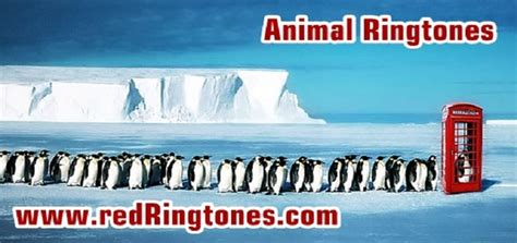 animals ringtone  ringtone downloads animal ringtones