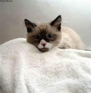 cat on towel