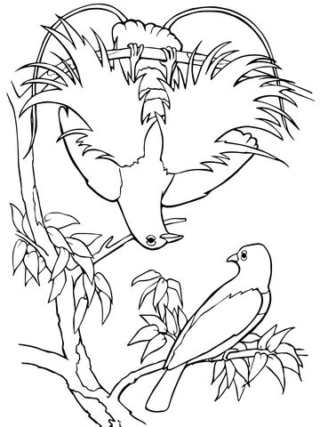 Blue Bird-of-Paradise coloring page | SuperColoring.com