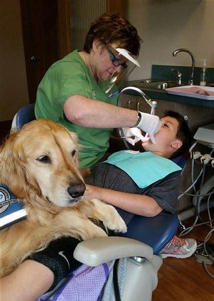 comfort dental hden meet the dog who makes kids actually like going to the