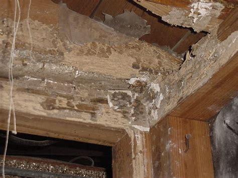 Can Termites Live Under House