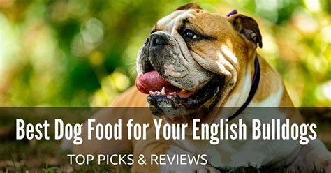 best food for bulldog puppy best food for your bulldogs top picks reviews