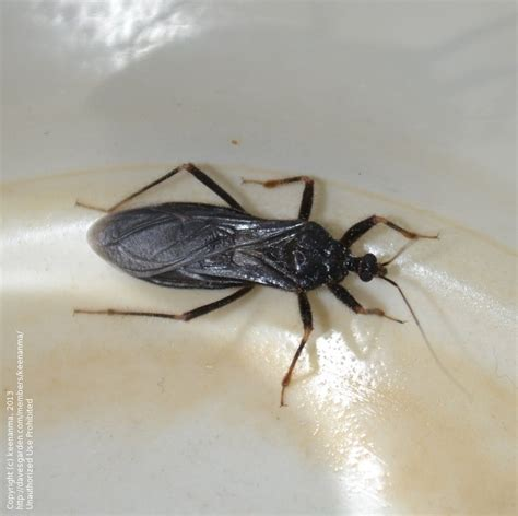 bathroom bugs identification insect and spider identification what is this bug 2 by