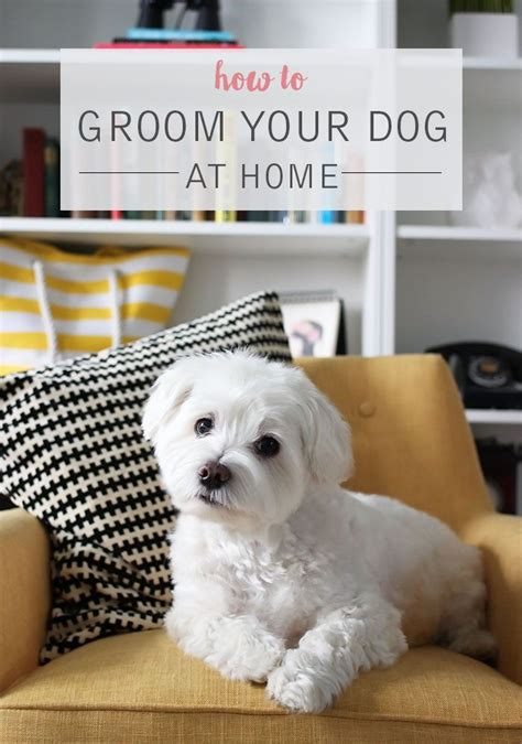 7 Tips On Grooming Your by 3249 Best Favorite Breeds Images On German