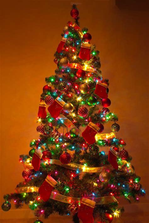 christmas tree  christmas tree  virginia beautiful