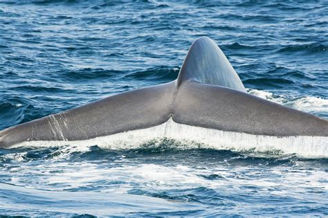 Wally The Whale X A W T B Fait La - san diego whale how and when to see them