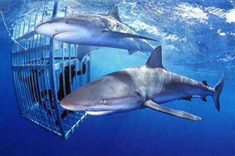 boat store honolulu hawaii shark tours oahu shark tours oahu activities