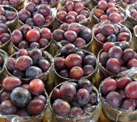 fruit d or canada plum the canadian encyclopedia