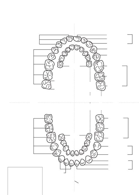 teeth chart template tooth numbering chart free