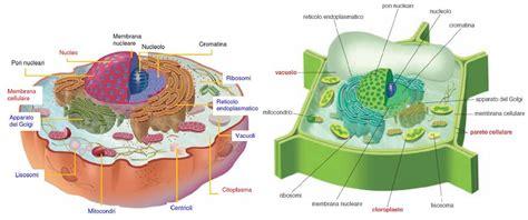 test sulla cellula biologia le cellule eucariotiche fisiologicamente