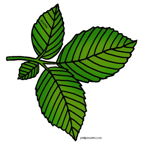 Clipart Leaves Free tree leaves clip cliparts co