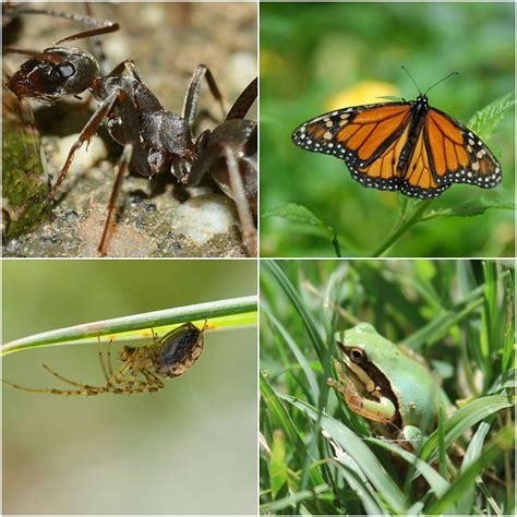 imagenes de animales que respiran por la piel 4 animales que respiran por estomas lifeder
