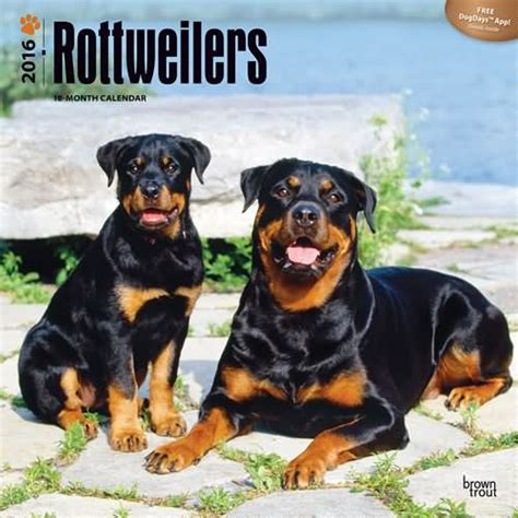 rottweiler gift rottweiler gifts section rottweiler calendars