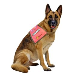 can service dogs in go anywhere service dogs registry