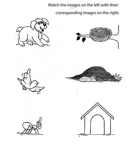printable animal homes worksheet animals and their homes worksheets for kindergarten