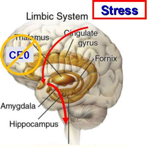 anxiety what turns it on what turns it books fixes for turning stress response into challenge