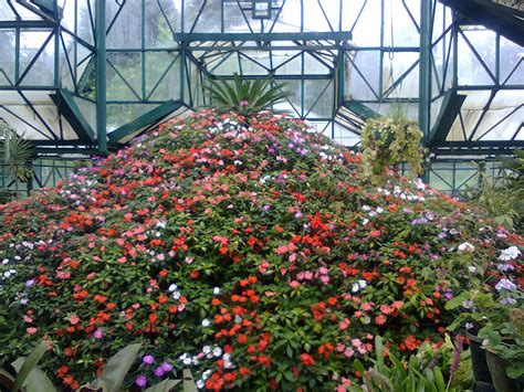 Flower Gardens In India Ooty Tourist Place Of Indian Hill Ooty Flower Garden Friendship