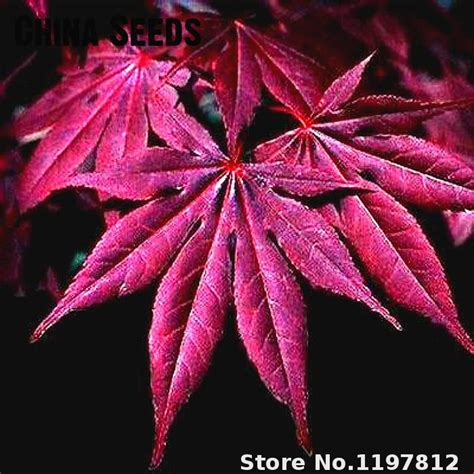 indoor japanese plants popular japanese indoor plants buy cheap japanese indoor