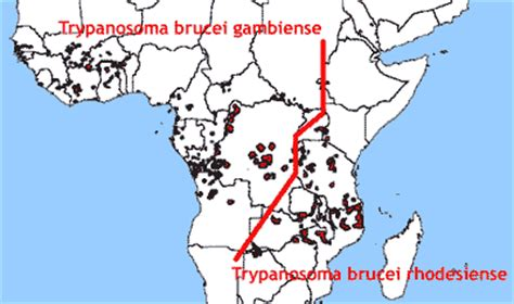 schlaf krankheit trypanosoma brucei rhodesiense gambiense