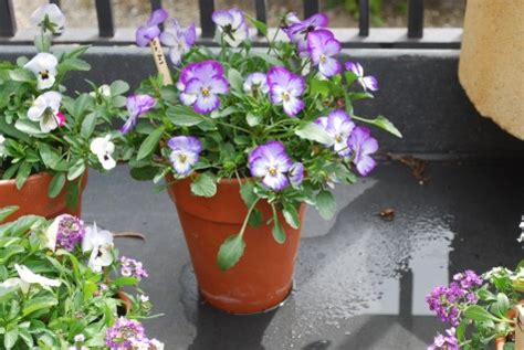 best flowers for small pots best flowers for small pots top 10 wonderful plants for