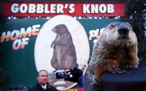 groundhog day prediction meaning groundhog day in punxsutawney