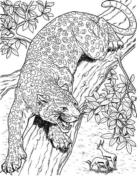 jaguar cat coloring page jacksonville jaguars free colouring pages