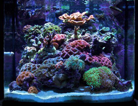 lade led per acquari illuminazione acquario cfl by search results for