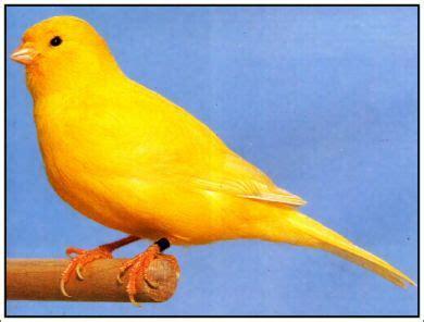 Cctv Burung Hantu dunia burung kicau lestarikan burung burung di atas bumi the knownledge