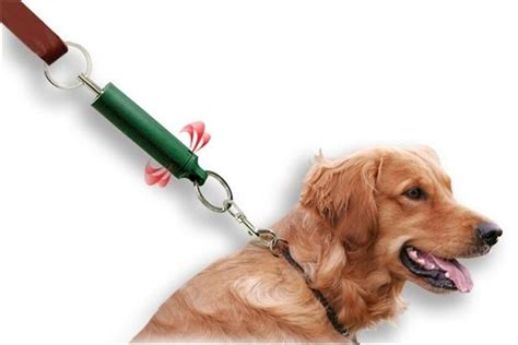 how to to stop pulling on leash stop pulling on lead householdgoods