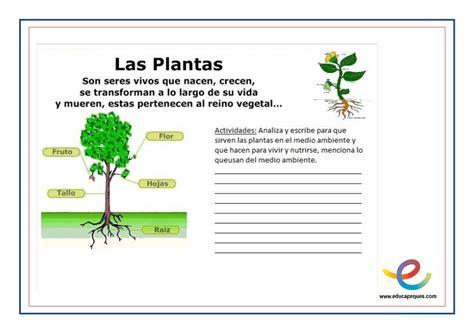 olguchiland las plantas ii las plantas partes y funciones fichas para primaria