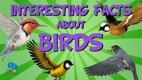 interesting facts about birds educational video for kids