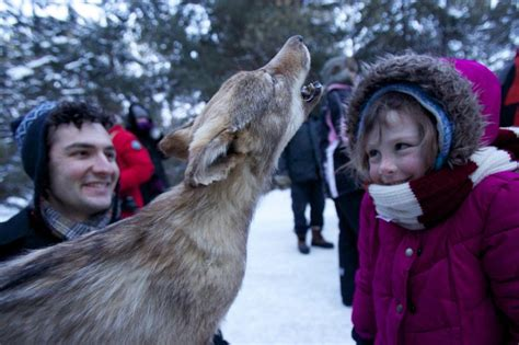 Fergies Howling Brings Out The Cops by Wolf Howling Marks Family Day Weekend In Algonquin