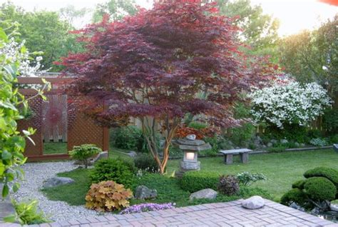 Patio Trees For Shade by 5 Best Behaved Trees To Grace A Patio