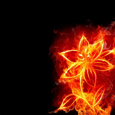 Christmas Menu Ideas photo collection abstract fire flower wallpapers