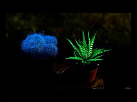 glow in the dark plants flavatar flavatar plants glow in the dark youtube