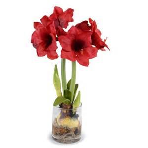 amaryllis plant new growth designs