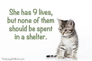 Cat Adoption June Is Adopt A Shelter Cat Month The Lazy Pit Bull