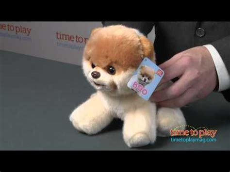 booyoutube all videos page 460 boo the world s cutest dog from gund youtube