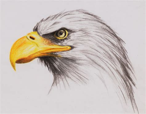 Images Of Eagle Drawings