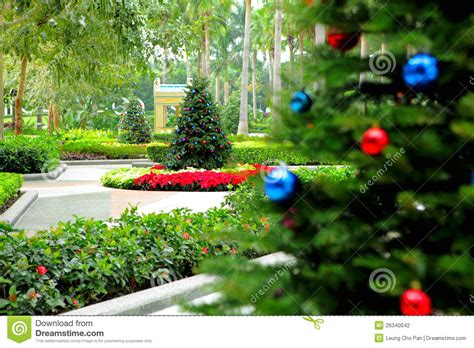 christmas tree in garden stock photo image of decoration
