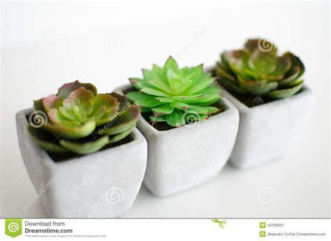 little plants little plants stock photo image 43109631