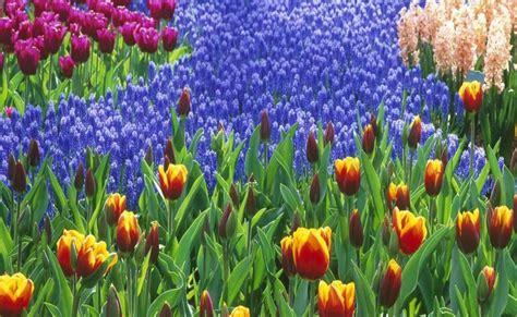 tappeto di fiori un tappeto di fiori immagini e sfondi per ogni momento